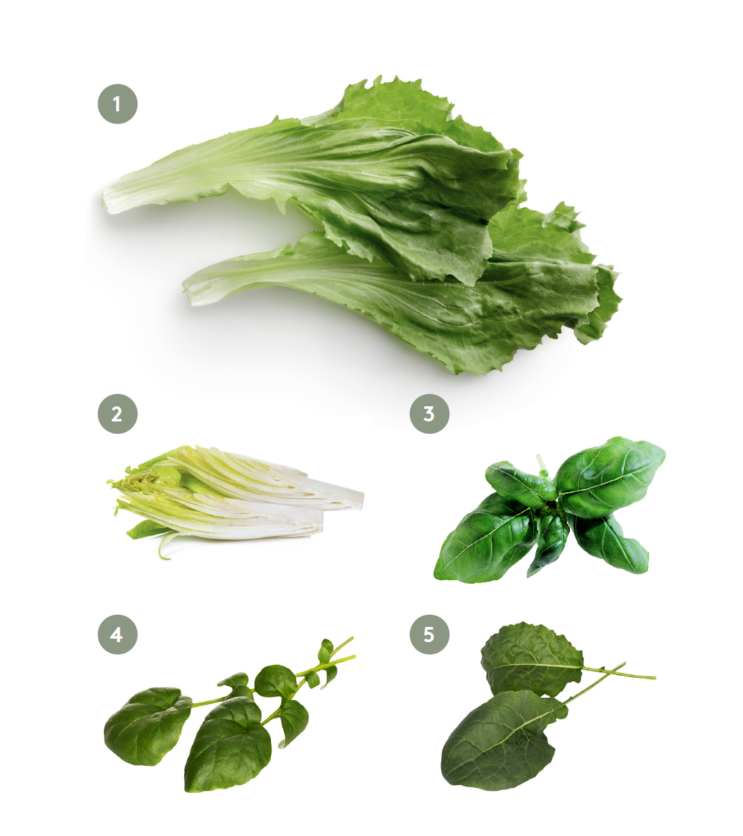 5 steg till den perfekta salladen - sallats sorter