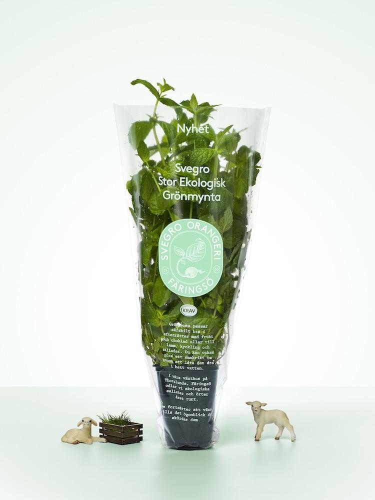 Stor Grönmynta Annonsbild Säsong