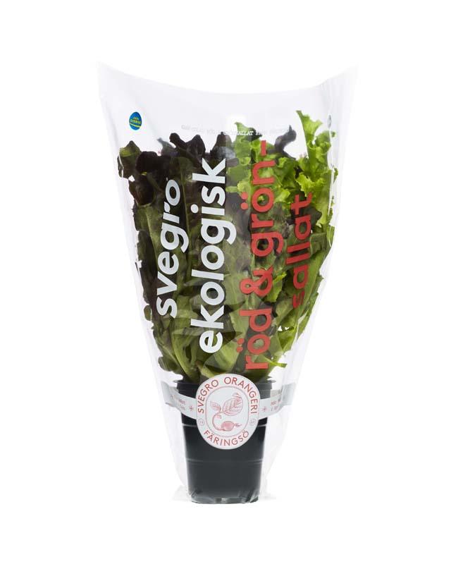 Svegro Röd&Grönsallat Förpackning