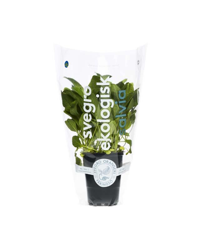 Svegro Salvia Förpackning