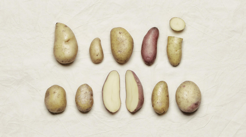 Potatiskultur