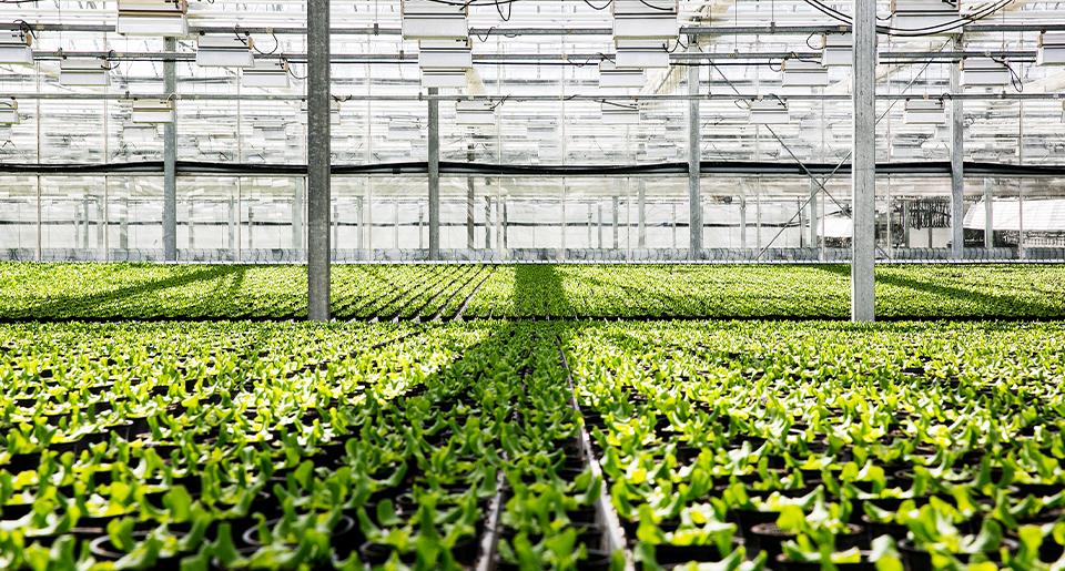 Svegro - Hållbar odling