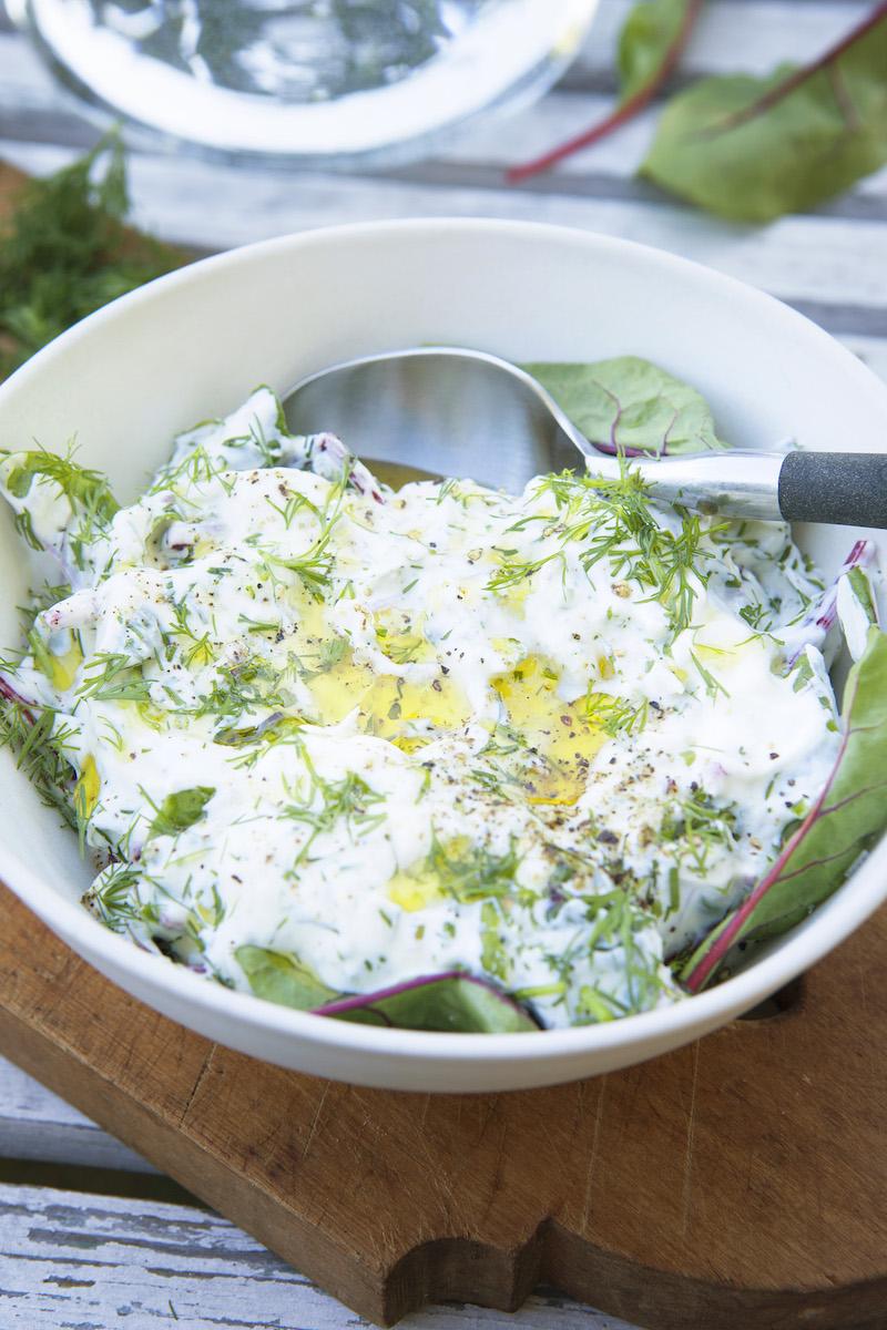 Yoghurtsallad med Röd Mangold och Dill